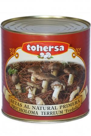 Tricholoma-Carbonera (Conserva)_